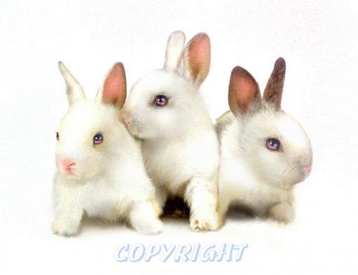 THREEBUNNIES3DEEPRICH2pinkeyes_1_1AAAreversed2_copyETSY.jpg